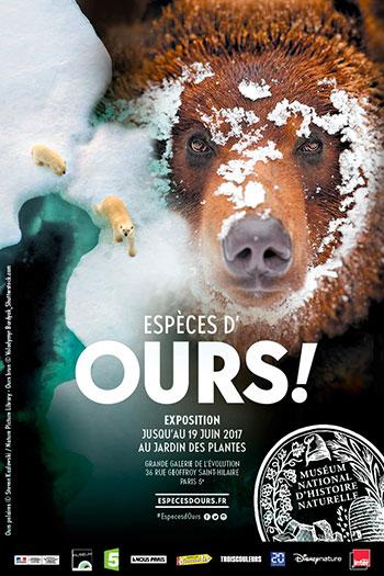 ours-museum-histoire-naturelle
